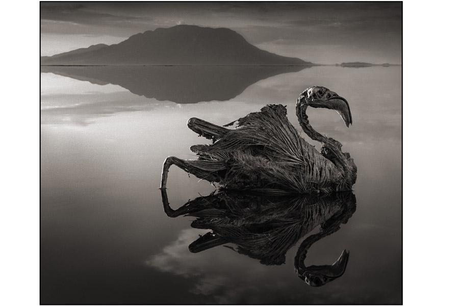 Okamenjena - serija fotografija mrtve prirode